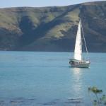 Sailing in Akaroa