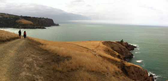Godley Head Panorama
