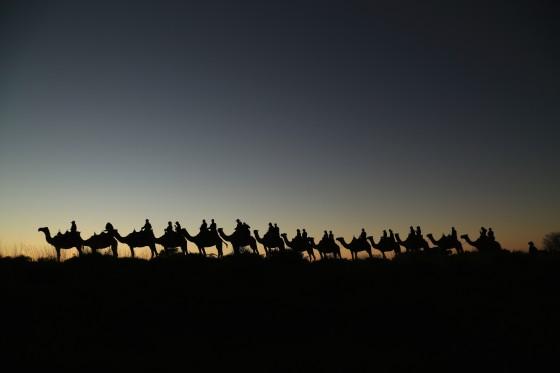 Uluru Camel Ride 62