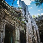 Ta Prohm, Angkor Archaeological Park, Siem Reap, Cambodia