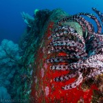 DQ 16 - Jan 2015 - Similan Diving Safaris - AreWeDreaming.com-140