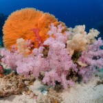 DQ 16 - Jan 2015 - Similan Diving Safaris - AreWeDreaming.com-18