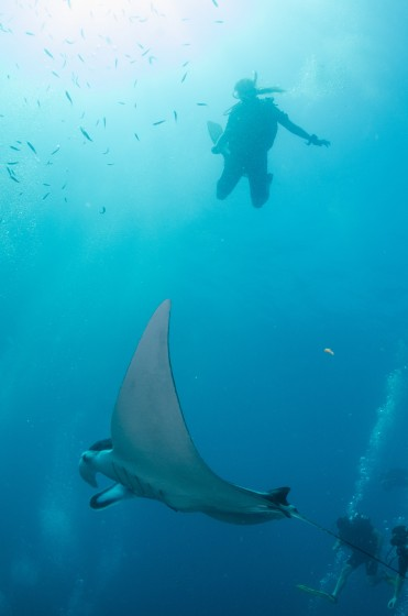 DQ 16 - Jan 2015 - Similan Diving Safaris - AreWeDreaming.com-188