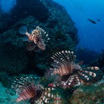 DQ 16 - Jan 2015 - Similan Diving Safaris - AreWeDreaming.com-22