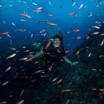 DQ 16 - Jan 2015 - Similan Diving Safaris - AreWeDreaming.com-224