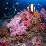 DQ 16 - Jan 2015 - Similan Diving Safaris - AreWeDreaming.com-239