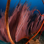 DQ 16 - Jan 2015 - Similan Diving Safaris - AreWeDreaming.com-4