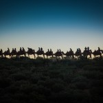 Camel Train at Sunrise, Australia